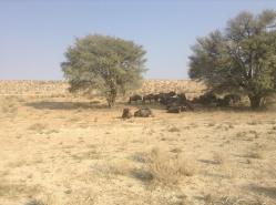 Khalagadi