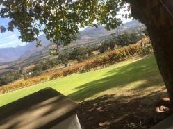 Vineyards on the Meerlust Estate.