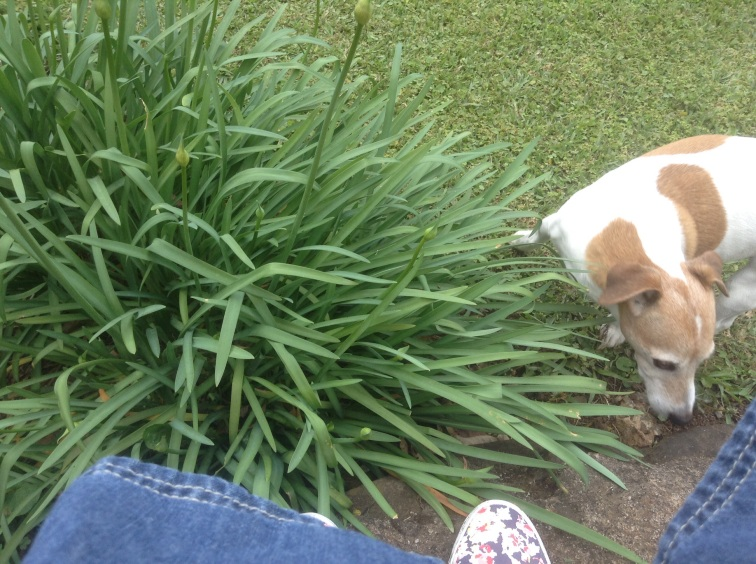 I'm in the garden with Maxi.